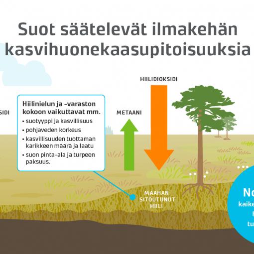Infografiikkaa soista, Lappi design, Tytti Mäenpää